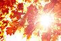 Солнечные лучи и осенние листья, фото № 23670113, снято 25 мая 2008 г. (c) Вероника Галкина / Фотобанк Лори