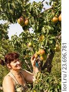 Купить «Женщина с грушами», фото № 23696781, снято 19 августа 2016 г. (c) Акиньшин Владимир / Фотобанк Лори
