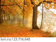 Купить «Дуб на берегу», фото № 23716645, снято 3 октября 2016 г. (c) Григорьев Владимир / Фотобанк Лори