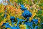 Михайловский сад — элемент фигурной ограды в виде цветка на фоне осенних листьев. Санкт-Петербург, Россия, фото № 23717265, снято 3 октября 2016 г. (c) Зезелина Марина / Фотобанк Лори
