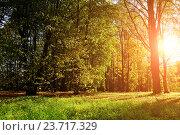 Купить «Autumn colorful landscape view of sunny autumn forest», фото № 23717329, снято 4 октября 2015 г. (c) Зезелина Марина / Фотобанк Лори