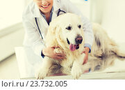 Купить «close up of vet with retriever dog at clinic», фото № 23732005, снято 19 июля 2015 г. (c) Syda Productions / Фотобанк Лори