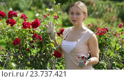 Купить «woman taking care of red rose», видеоролик № 23737421, снято 7 августа 2016 г. (c) Яков Филимонов / Фотобанк Лори