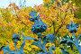 Михайловский сад — элементы фигурной ограды в виде цветов и листьев на фоне осеннего парка, Санкт-Петербург, Россия, фото № 23738053, снято 3 октября 2016 г. (c) Зезелина Марина / Фотобанк Лори