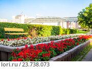 Купить «Цветы на клумбе», фото № 23738073, снято 16 сентября 2015 г. (c) Юрий Губин / Фотобанк Лори