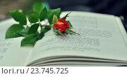 Красная роза и книга. Стоковое фото, фотограф Olga Goryunova / Фотобанк Лори