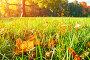 Осенний солнечный пейзаж  - опавшие кленовые осенние листья на траве на фоне размытого осеннего парка, фото № 23765693, снято 3 октября 2016 г. (c) Зезелина Марина / Фотобанк Лори