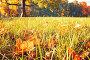 Желтые опавшие кленовые листья на траве в солнечном осеннем парке - осенний пейзаж, фото № 23765789, снято 3 октября 2016 г. (c) Зезелина Марина / Фотобанк Лори