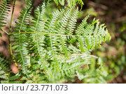 Купить «Close-up of fern», фото № 23771073, снято 7 июля 2016 г. (c) Wavebreak Media / Фотобанк Лори