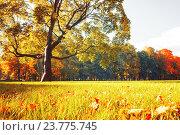 Купить «Осенний солнечный день в парке - красивый осенний пейзаж с живописным кленом», фото № 23775745, снято 3 октября 2016 г. (c) Зезелина Марина / Фотобанк Лори