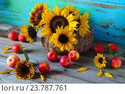 Натюрморт с яблоками и подсолнухами. Стоковое фото, фотограф Наталья Майорова / Фотобанк Лори