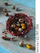 Перепелиные яйца в гнезде. Стоковое фото, фотограф Наталья Майорова / Фотобанк Лори