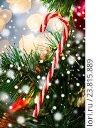 Купить «close up of sugar cane candy on christmas tree», фото № 23815889, снято 7 октября 2015 г. (c) Syda Productions / Фотобанк Лори