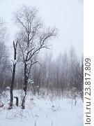 Деревья и кусты зимой под снегом и инеем / Winter bare trees without leaves under snow. Стоковое фото, фотограф Serg Zastavkin / Фотобанк Лори