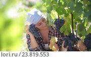Купить «female worker at grape farm», видеоролик № 23819553, снято 2 октября 2016 г. (c) Яков Филимонов / Фотобанк Лори
