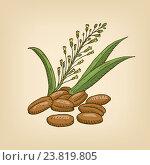 Рыжик с семенами. Стоковая иллюстрация, иллюстратор Станислав Хомутовский / Фотобанк Лори