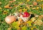 Осенний натюрморт с яблоками и тыквой, эксклюзивное фото № 23820349, снято 16 октября 2016 г. (c) Svet / Фотобанк Лори