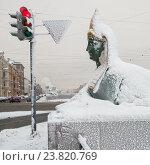 Купить «Сфинкс Египетского моста через Фонтанку. Зимний Санкт-Петербург», эксклюзивное фото № 23820769, снято 16 января 2010 г. (c) Александр Алексеев / Фотобанк Лори