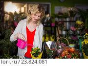 Купить «Female florist watering flowers», фото № 23824081, снято 17 апреля 2016 г. (c) Wavebreak Media / Фотобанк Лори