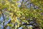 Боярышник обыкновенный (лат. Crataegus laevigata) ,ветка скрасными ягодами о листьями.Фокус на переднем плане, эксклюзивное фото № 23825657, снято 16 октября 2016 г. (c) Svet / Фотобанк Лори