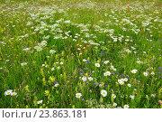 Купить «Alpine flower meadow, Switzerland», фото № 23863181, снято 8 июля 2016 г. (c) age Fotostock / Фотобанк Лори
