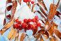 Гроздь рябины в снегу, фото № 23887889, снято 21 октября 2016 г. (c) Икан Леонид / Фотобанк Лори