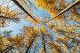 Кроны деревьев в осеннем парке, фото № 23923869, снято 19 октября 2016 г. (c) Argument / Фотобанк Лори