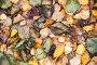 Colorful fallen autumnal leaves, фото № 23924825, снято 9 октября 2016 г. (c) Евгений Сергеев / Фотобанк Лори