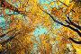 Осенние деревья с желтыми листьями на фоне неба - осенний лесной пейзаж, фото № 23925061, снято 9 октября 2016 г. (c) Зезелина Марина / Фотобанк Лори