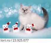Купить «Сибирский котенок, новогодняя тема для открытки», фото № 23925077, снято 17 января 2016 г. (c) ElenArt / Фотобанк Лори