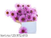 Купить «bouquet of beautiful autumn chrysanthemums», фото № 23972613, снято 3 октября 2016 г. (c) Peredniankina / Фотобанк Лори
