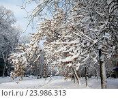 Купить «Заснеженные деревья на городской улице», фото № 23986313, снято 9 декабря 2013 г. (c) Светлана Кириллова / Фотобанк Лори
