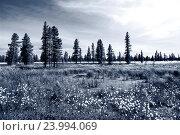 Летний пейзаж с цветущей пушицей. Стоковое фото, фотограф Владимир Ковальчук / Фотобанк Лори
