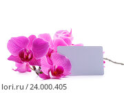 Купить «pink stripy phalaenopsis orchid», фото № 24000405, снято 31 октября 2016 г. (c) Peredniankina / Фотобанк Лори