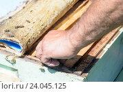 Пчеловод достает деревянный каркас сот из улья. Стоковое фото, фотограф John Williams / Фотобанк Лори