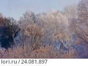 Заснеженные деревья зимой в парке. Стоковое фото, фотограф Сергей Носов / Фотобанк Лори