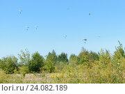 Парашютный десант спускается к земле на фоне голубого ясного неба. Стоковое фото, фотограф Игорь Травкин / Фотобанк Лори