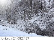 Купить «Winter landscape», фото № 24082437, снято 22 февраля 2016 г. (c) ElenArt / Фотобанк Лори