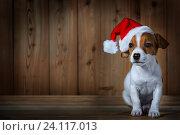 Купить «jack russel puppy in red sunta cap on wooden background», фото № 24117013, снято 29 октября 2016 г. (c) Анатолий Типляшин / Фотобанк Лори