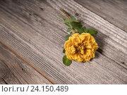 Желтая роза на деревянном фоне. Стоковое фото, фотограф Elisanth / Фотобанк Лори