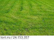 Подстриженная зеленая трава летом. Стоковое фото, фотограф lana1501 / Фотобанк Лори