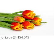 Купить «Букет тюльпанов на белом фоне», фото № 24154045, снято 9 марта 2016 г. (c) Елена Коромыслова / Фотобанк Лори