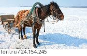 Купить «Лошадь, запряженная в сани, на стоит берегу заснеженной реки», видеоролик № 24154245, снято 16 июля 2019 г. (c) FotograFF / Фотобанк Лори
