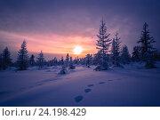 Зимний пейзаж,  деревья на закате, фото № 24198429, снято 4 января 2015 г. (c) Оксана Владимировна Грачева / Фотобанк Лори