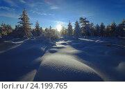 Купить «Живописный зимний лесной пейзаж», фото № 24199765, снято 22 ноября 2015 г. (c) Оксана Владимировна Грачева / Фотобанк Лори