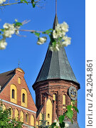Купить «Башня Кафедрального собора Кёнигсберга. Символ города Калининград (до 1946 кода Кёнигсберг), Россия», фото № 24204861, снято 18 июня 2016 г. (c) Сергей Трофименко / Фотобанк Лори