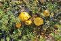 Шляпки грибов под солнцем, фото № 24209461, снято 7 августа 2013 г. (c) Сергей Дрозд / Фотобанк Лори