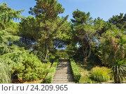 Купить «Лестница в южном парке», фото № 24209965, снято 19 сентября 2012 г. (c) Наталья Гармашева / Фотобанк Лори