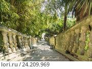 Купить «Старая лестница в южном парке с бамбуком», фото № 24209969, снято 19 сентября 2012 г. (c) Наталья Гармашева / Фотобанк Лори