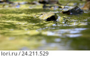 Купить «Текущая вода в лесном ручейке», видеоролик № 24211529, снято 10 июля 2016 г. (c) Иванов Алексей / Фотобанк Лори